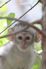 baby monkey two